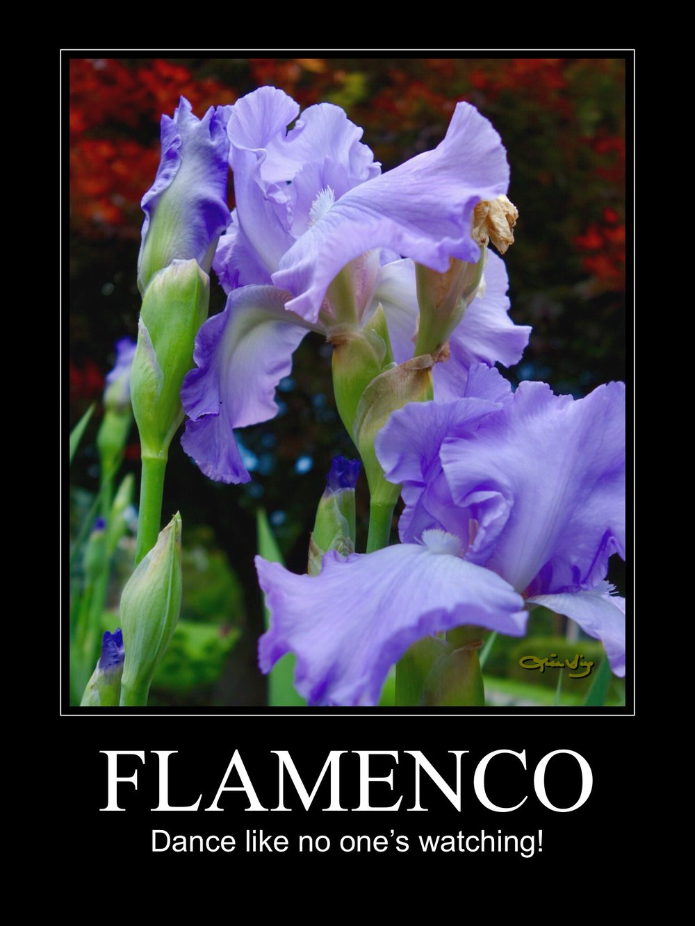 Flamenco poster.JPG