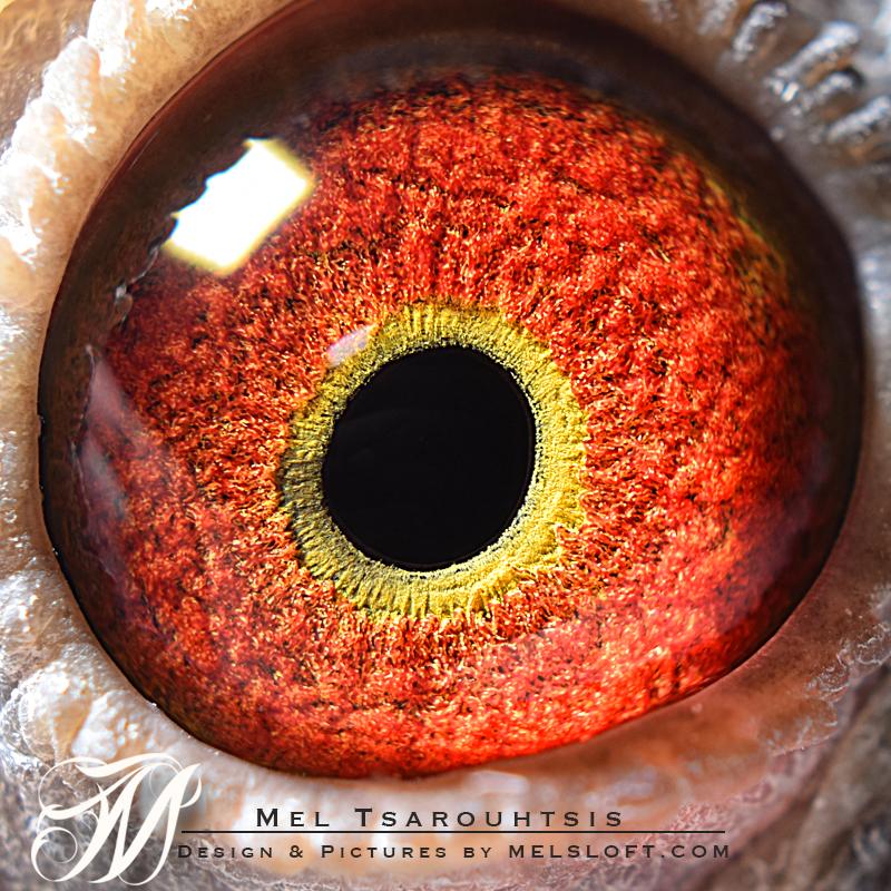 eye of daniel.jpg
