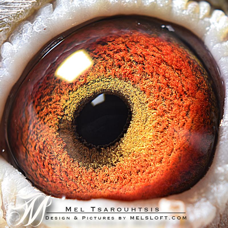 eye of ATLAS.jpg