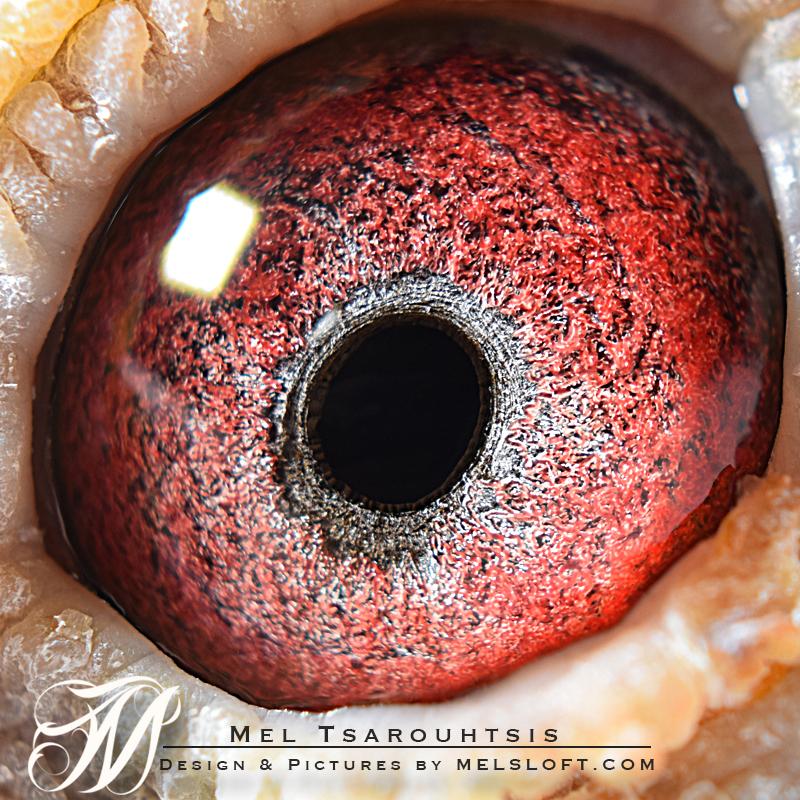 eye of clio.jpg