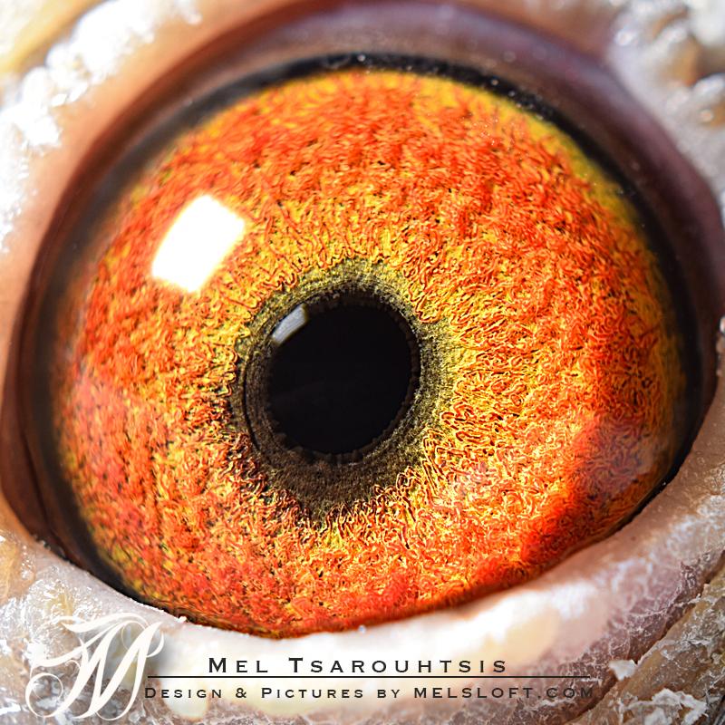 eye of daniela.jpg