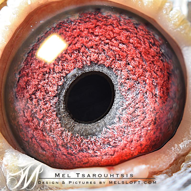eye of daphne.jpg