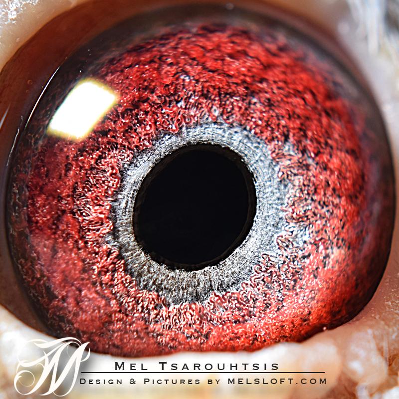 eye of excalibur.jpg