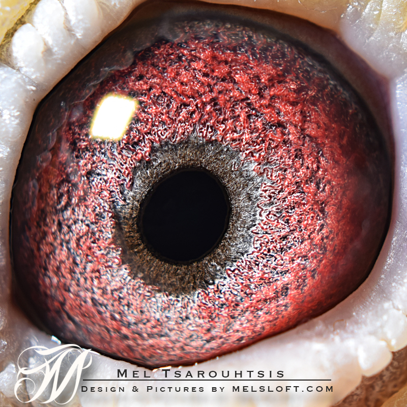 prometheus eye.jpg