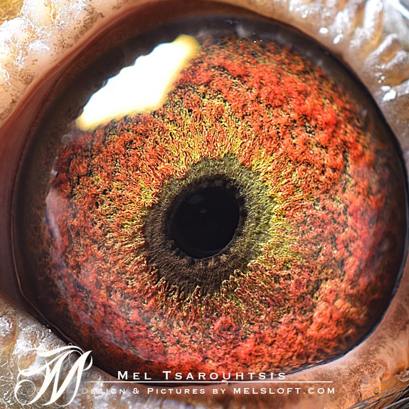 88 eye.jpg