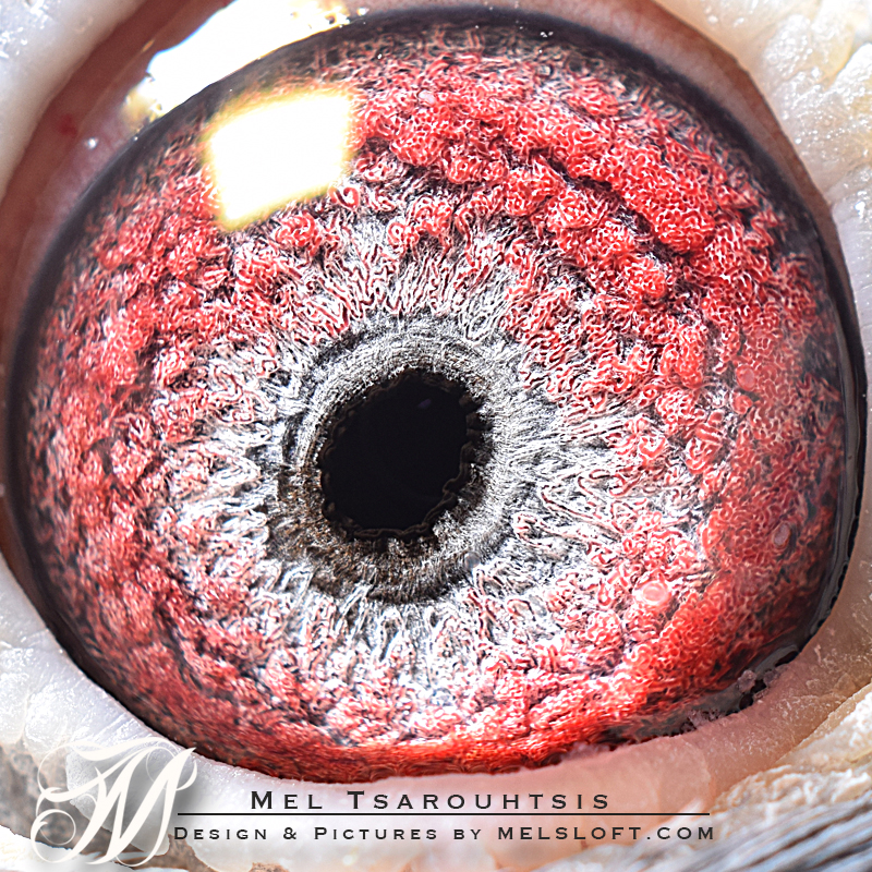 eye of 131.jpg