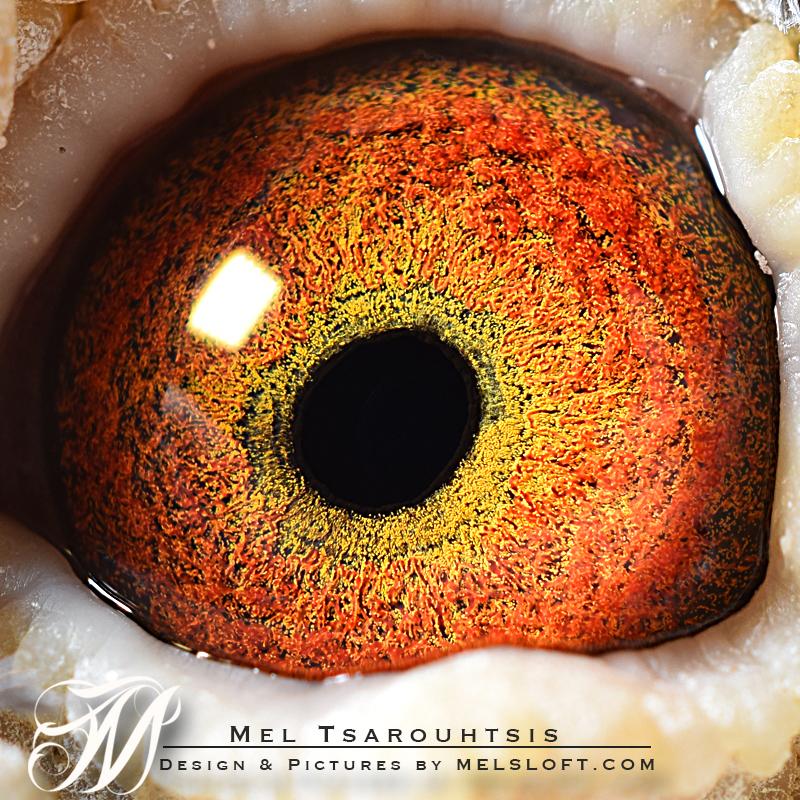 eye of denn starr.jpg