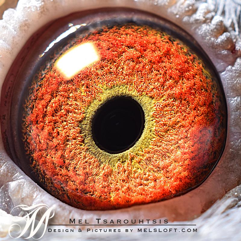 eye of endura.jpg