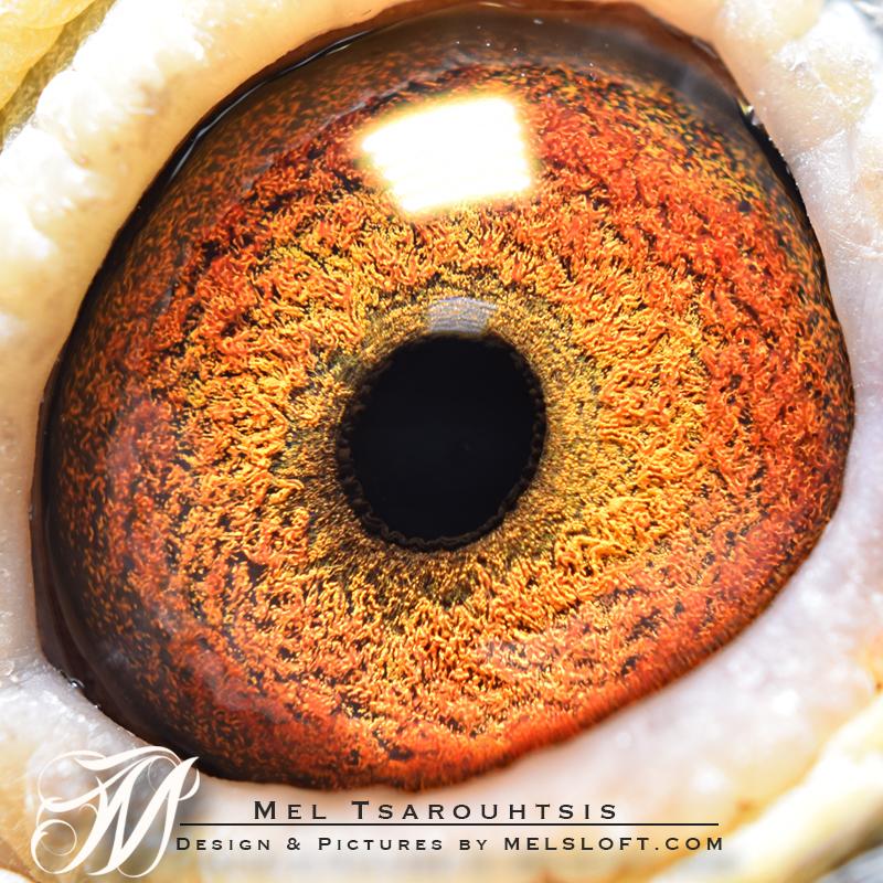 eye of goede 129.jpg