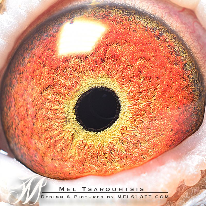 eye of master prime.jpg