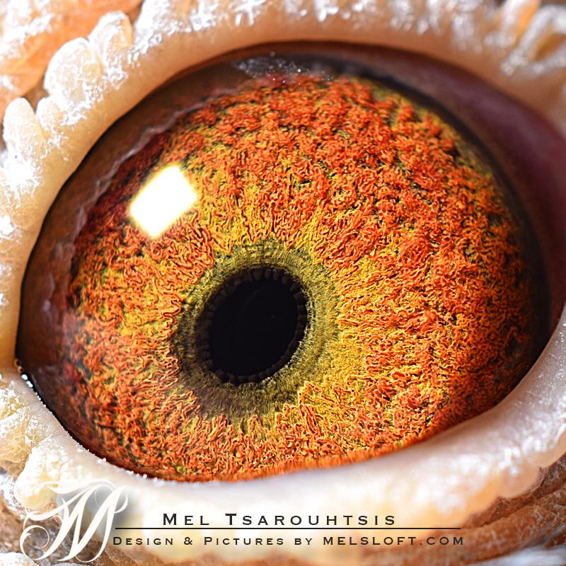 eye of power lep.jpg