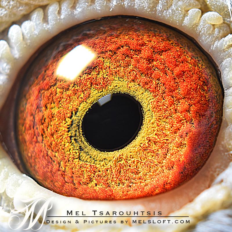 lep g eye.jpg