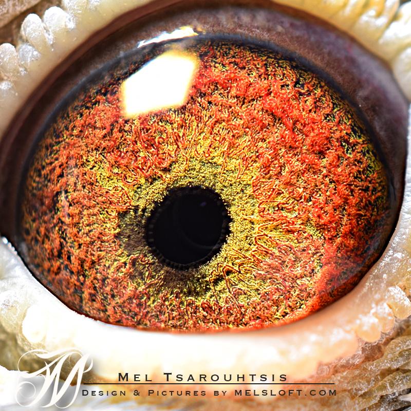 wyatt eye.jpg