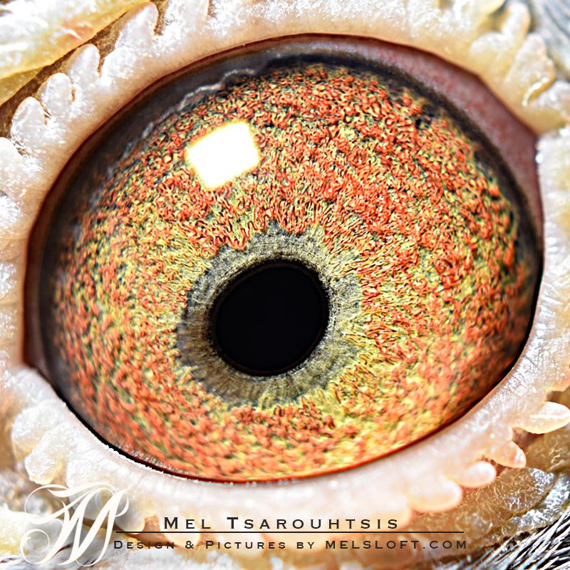 eye of 61 2017.jpg