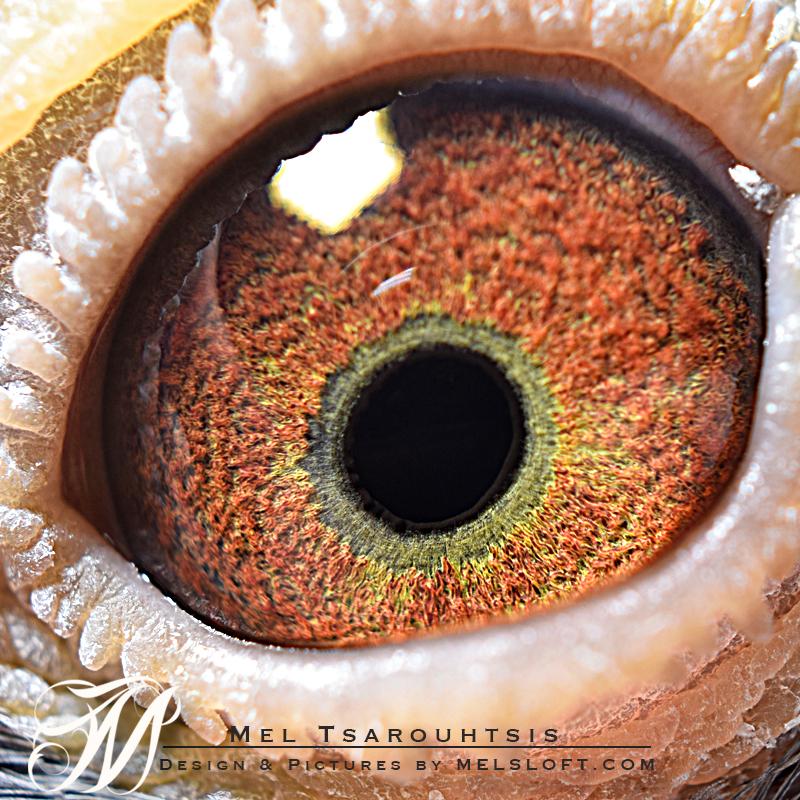 eye of 93798 c sweet 10.jpg