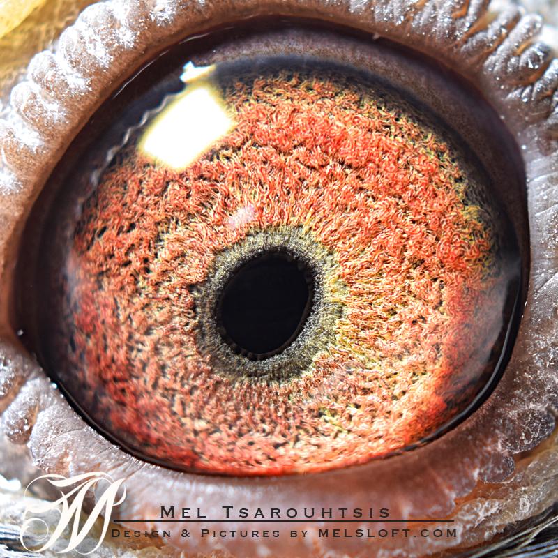 eye of 93769 hen conan.jpg