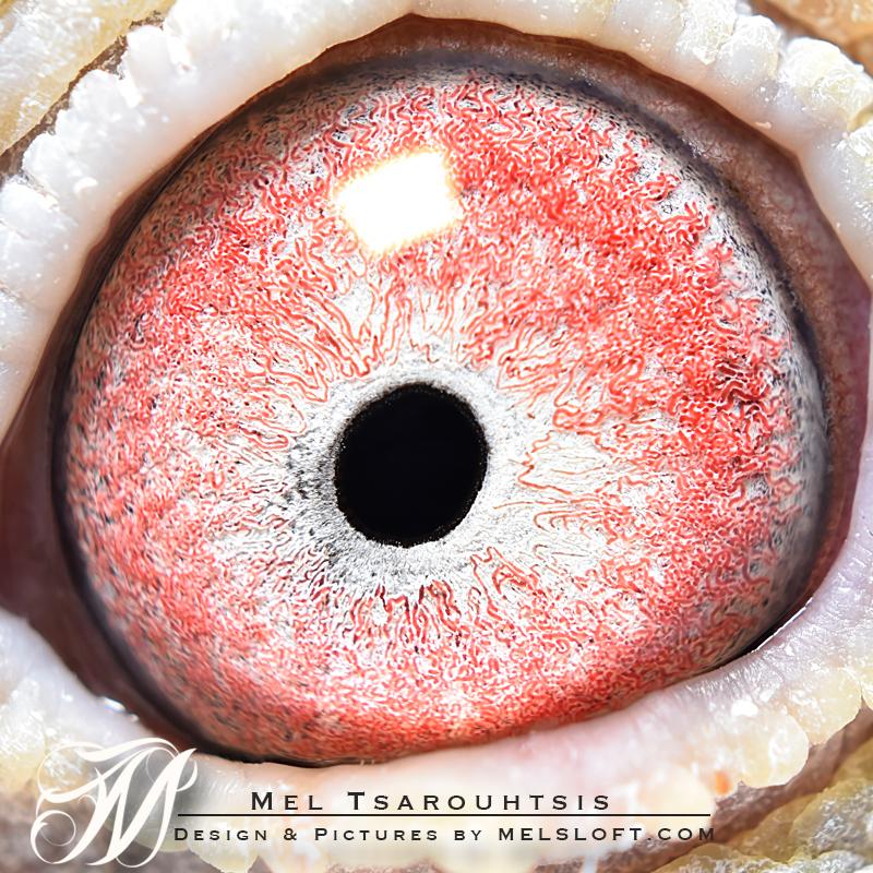 eye of alveraz cock.jpg