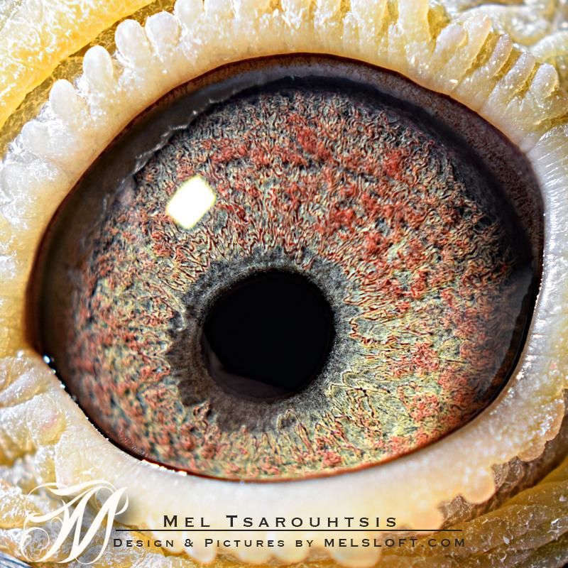 eye of leps 66.jpg