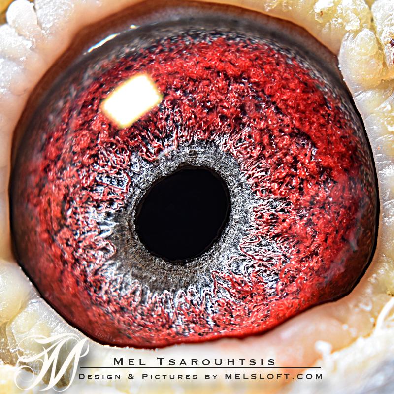 eye of lerie.jpg