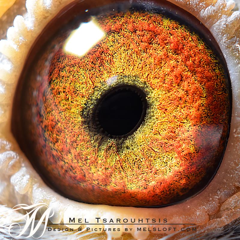 eye of mtfl 57 NEW.jpg