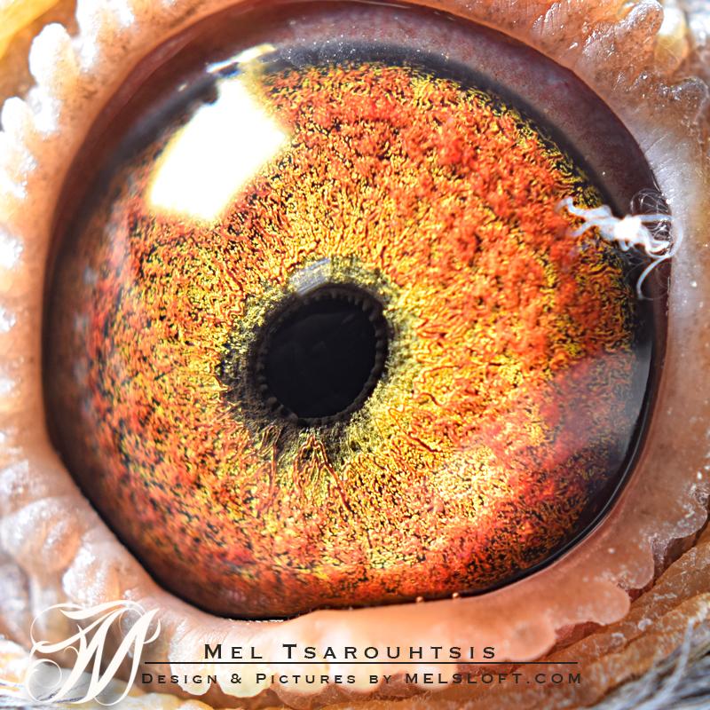 eye of mtfl 57.jpg