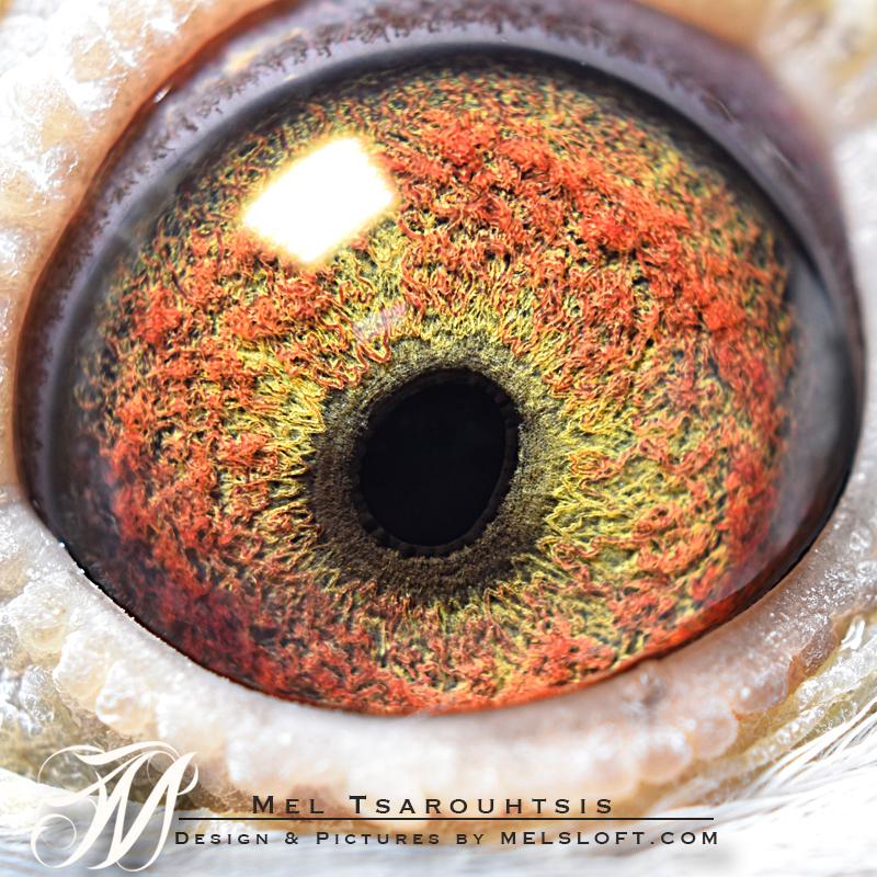 eye of mtfl 60.jpg