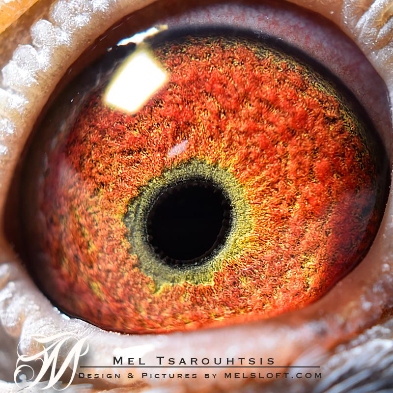 eye of mtfl 76.jpg