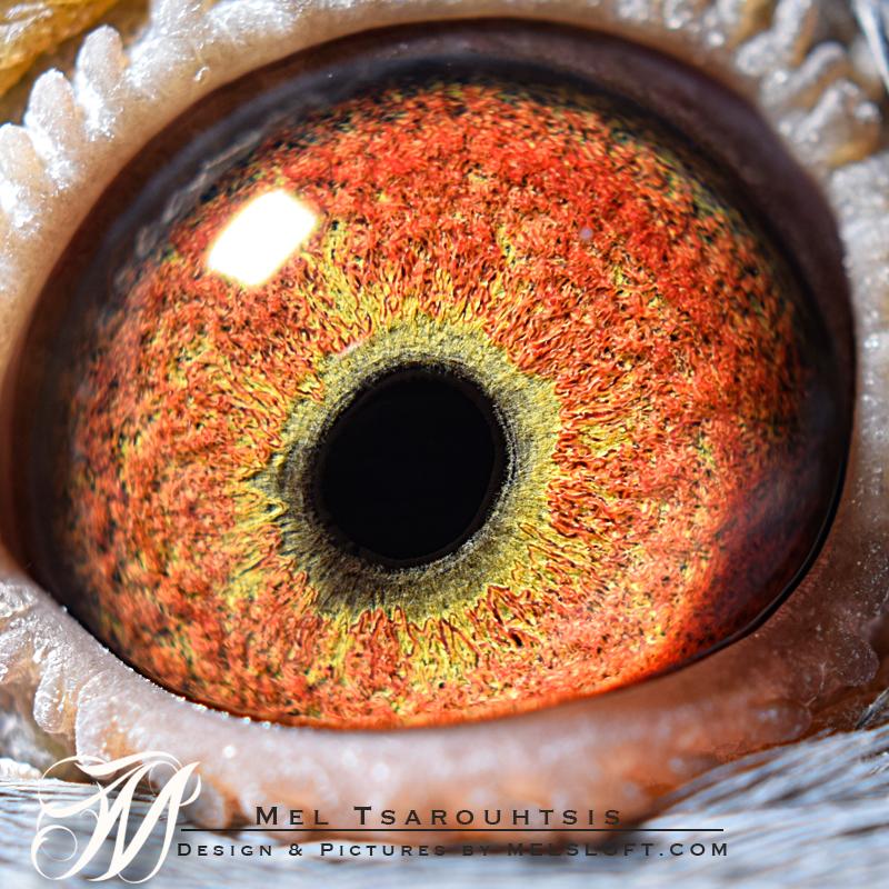 eye of mtfl 81.jpg