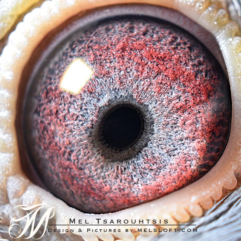 eye of mtfl 83.jpg