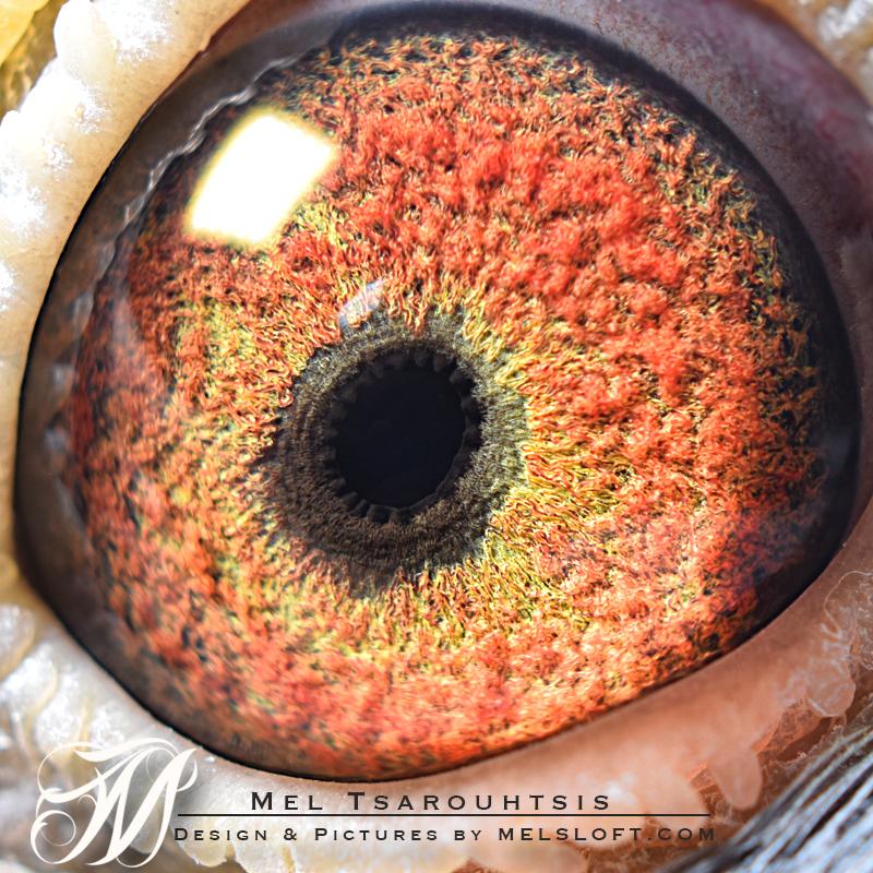 eye of mtfl 84 hen.jpg