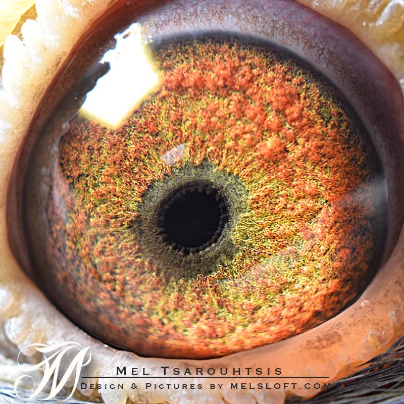 eye of mtfl 85.jpg