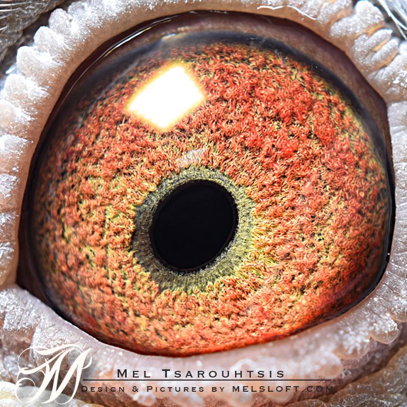 eye of mtfl 86 LC.jpg