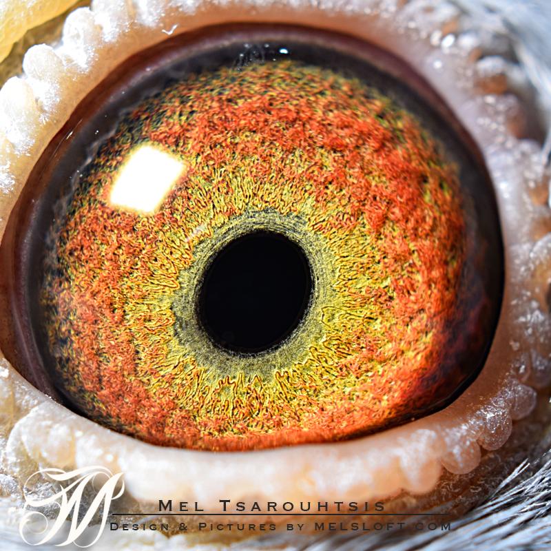 eye of mtfl 92 LC FS.jpg