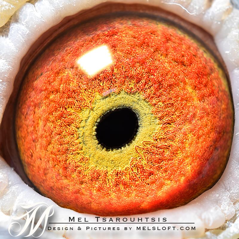 eye of nepls 840.jpg
