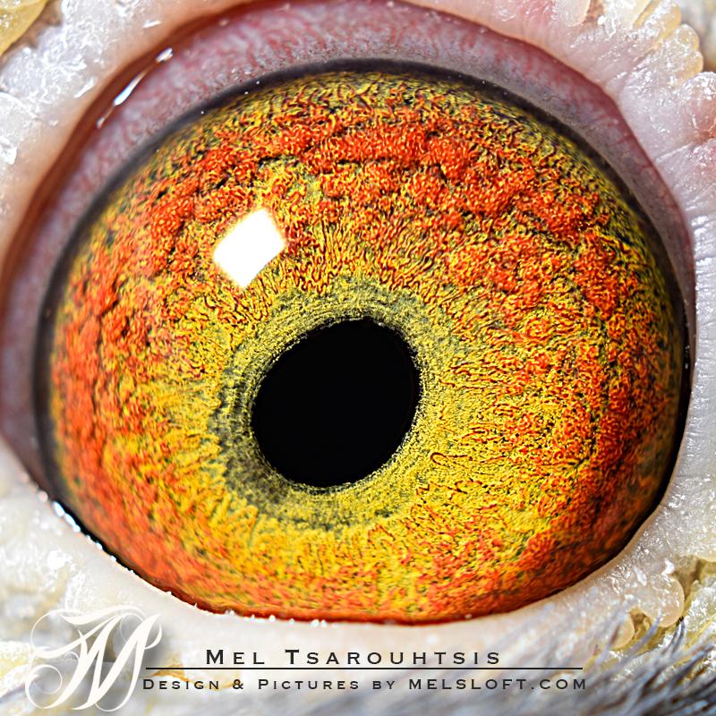 eye of Romulus.jpg