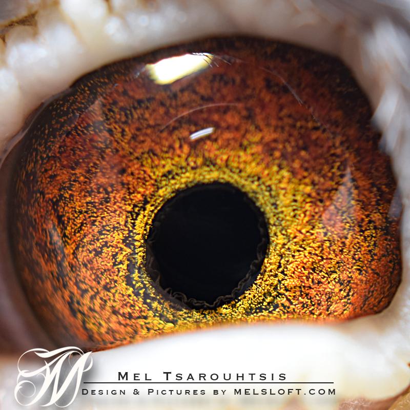 eye of sweet 10.jpg