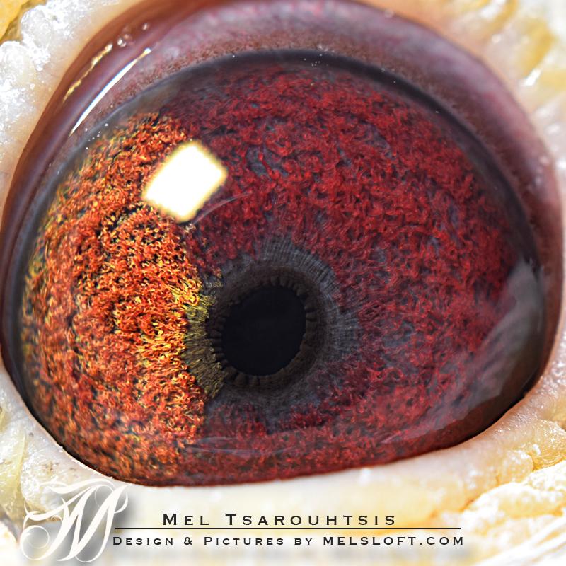 eye of white head.jpg