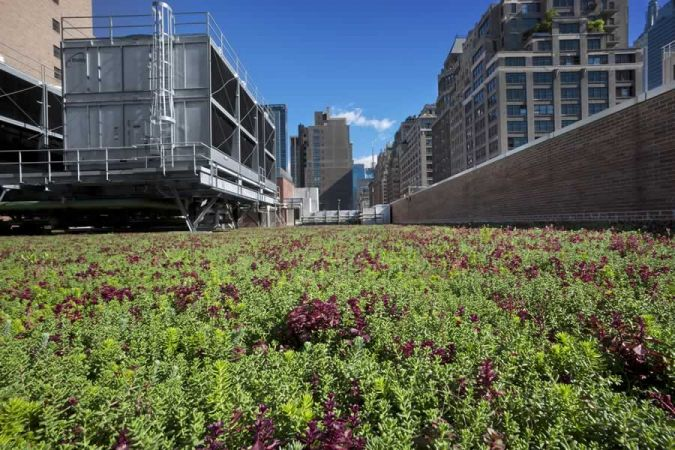 SUNY Fashion Institute of Technology - Green Roof Installation