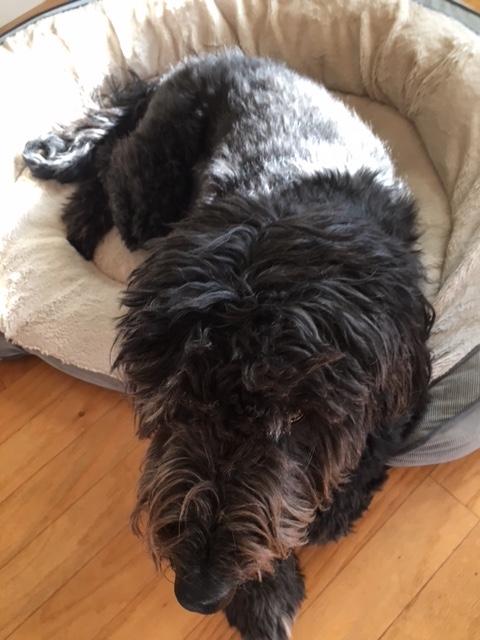 Rescue Pup: Fabio