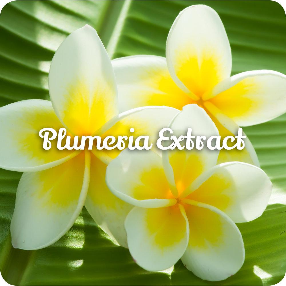 plumeria.jpg