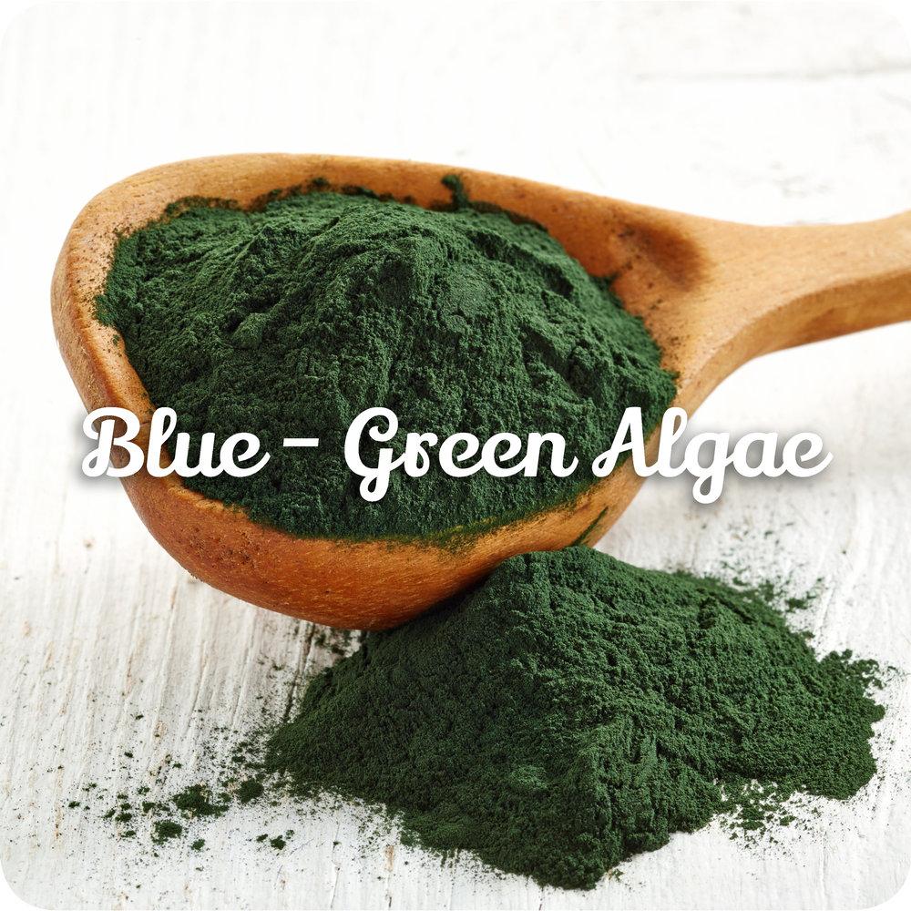 bluegreenalgae.jpeg
