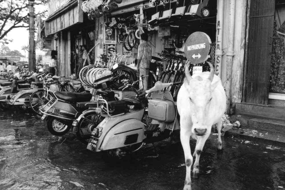 Cow and Motorcycles.jpg
