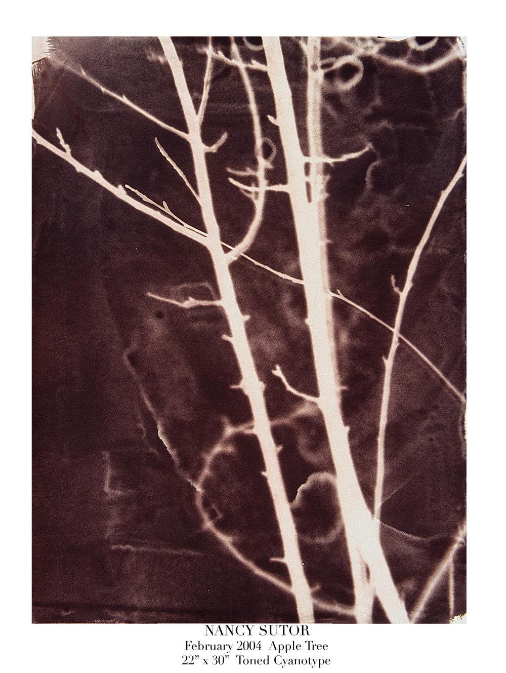 (3) #27 Apple Tree.jpg