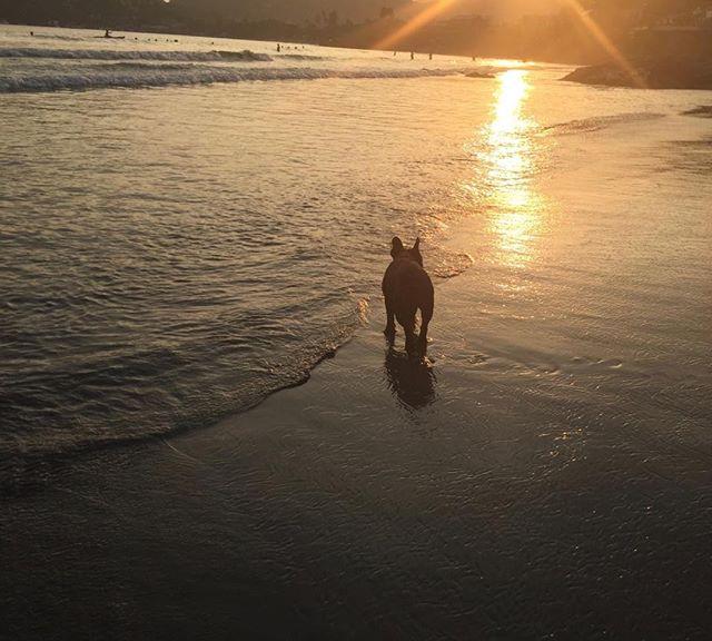 Sunset stroll. #casaquixotezihua#bestbeaches