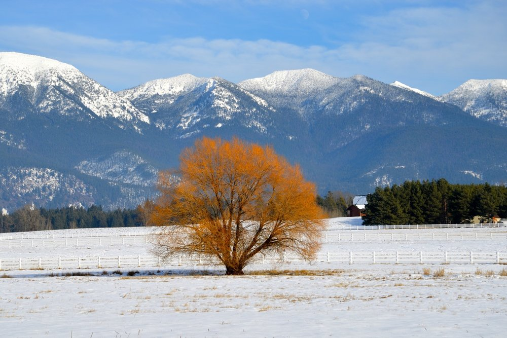 MontanaView.jpg