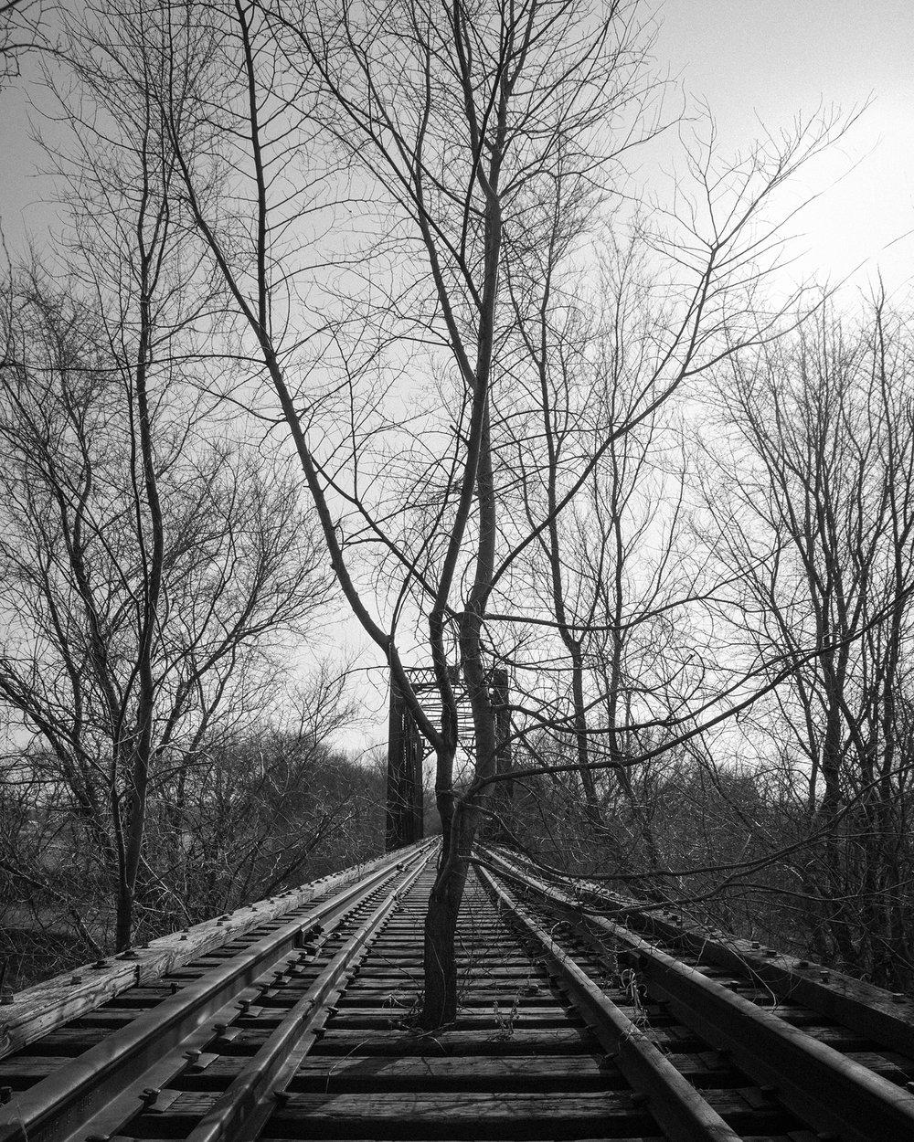 Resilience - Wes Eisenhauer.jpg