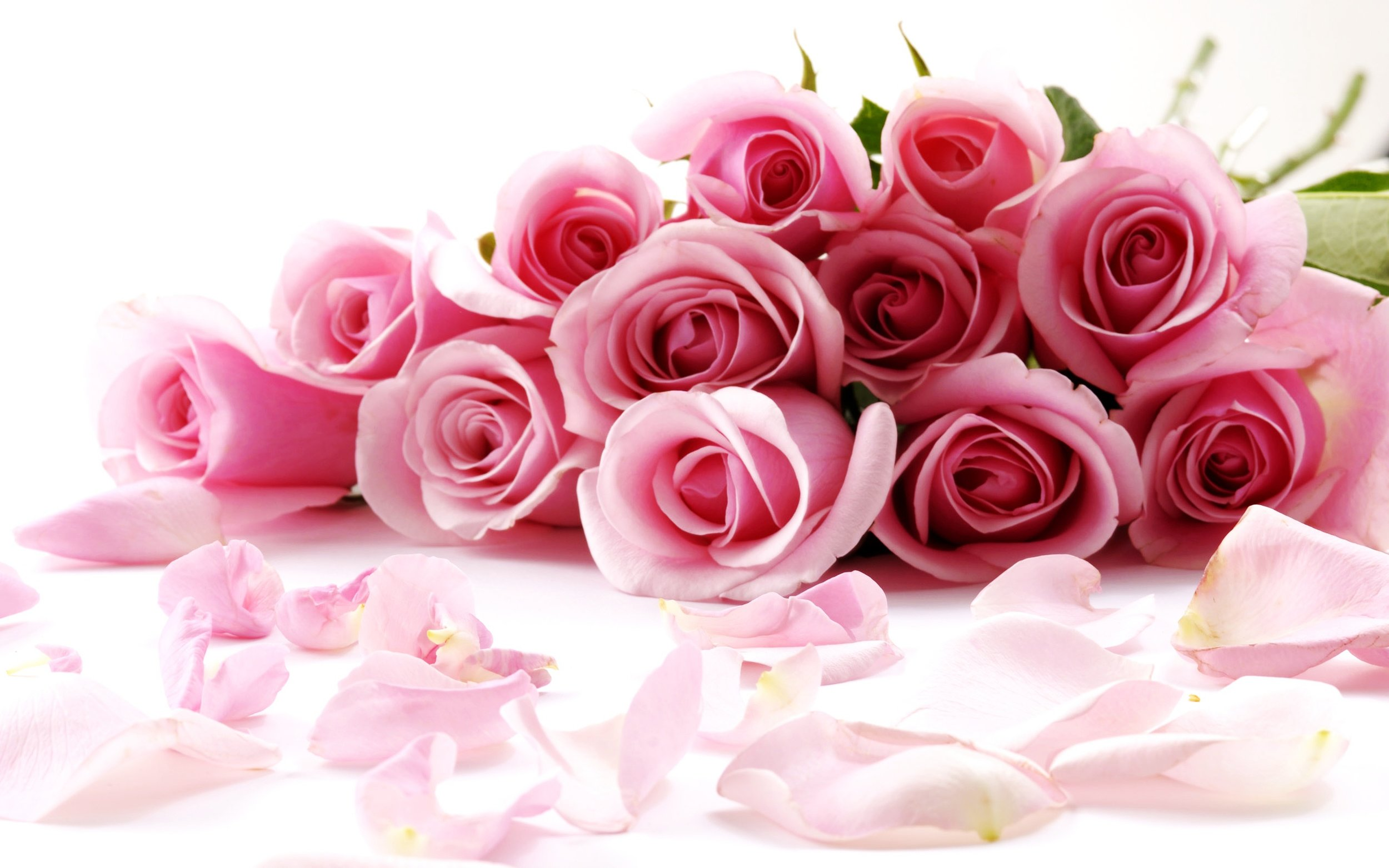 Pink-Roses-Wallpapers-Free-Download