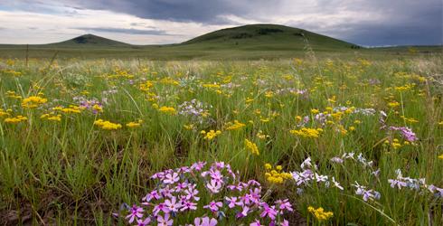 The magestic Zumwalt Prairie