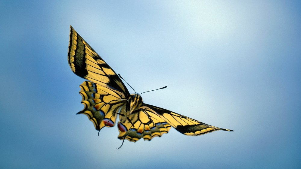 beautiful_yellow_butterfly_flying_in_sky_hd_photo.jpg