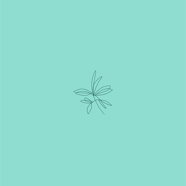 you guys don't get to see much of the branding work I do for a handful of clients, so here's a little taste! 🌿 currently I'm thinking up ways to bring some texture to these plant babies because texture doesn't just exist in wedding suites!  how would you add texture to these delicate lines? 🤔 tell me below - give me some inspo!